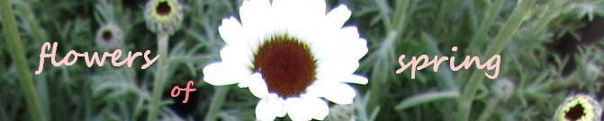 アフリカンアイズ春の花