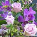 パレット紫・オークラ2